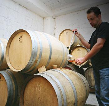 cantine vinicole